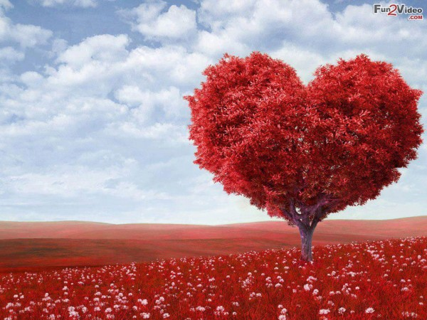 red-heart-love-picture-600x450