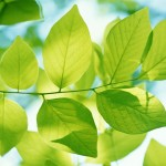 green-branches-wallpaper