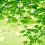 green-leaves-344-21