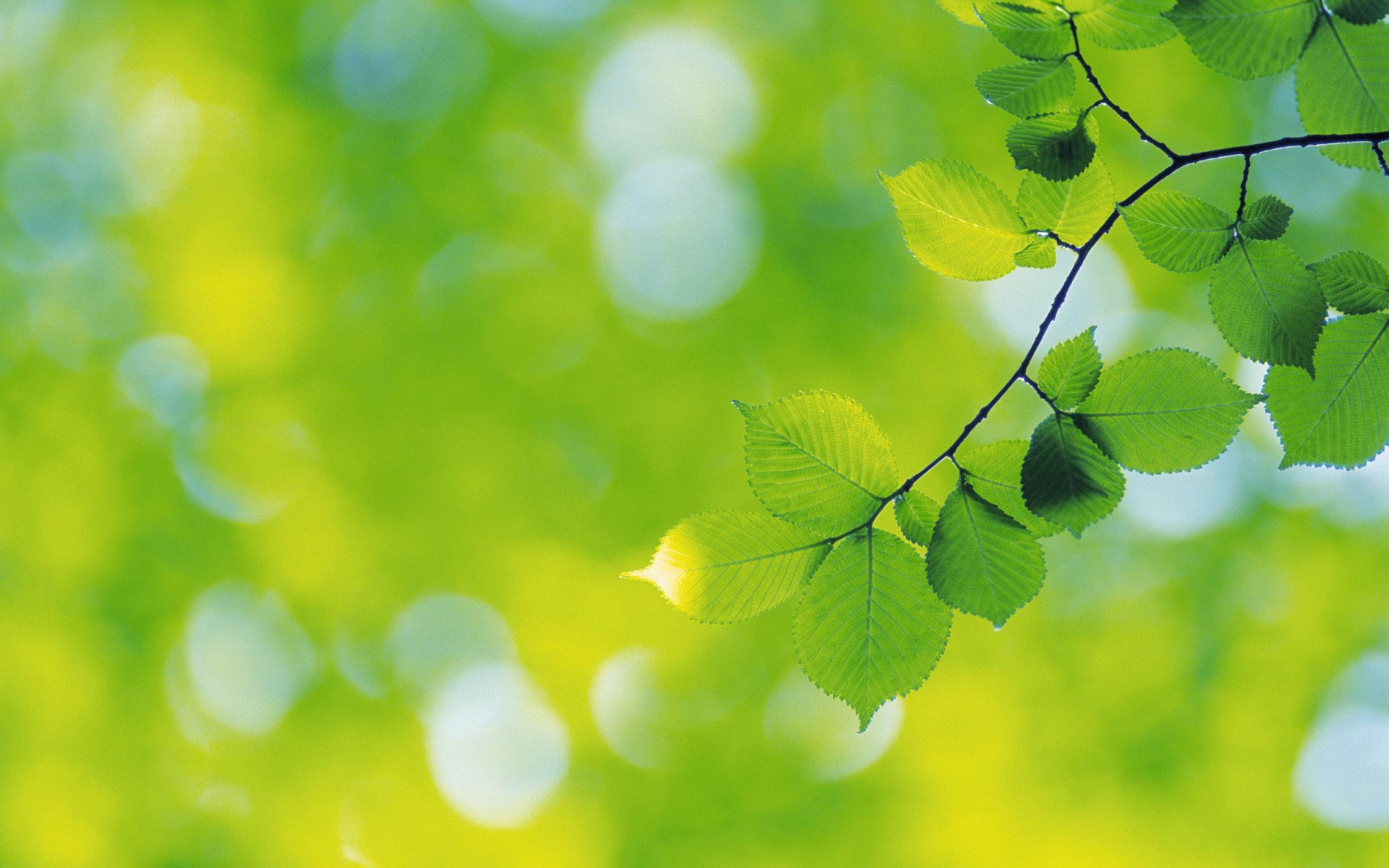 green-nature-wallpapers-(16)