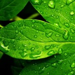 nature-leaf-and-backgrounds-green-fresh-x-for-your